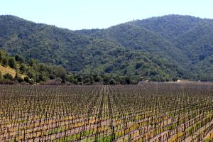 how to get around casablance valley wine tasting chile