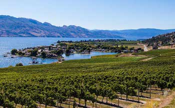 Quails Gate, Sunnyside, Stewart Family Estates, BC Wine, East Kelowna, West Kelowna